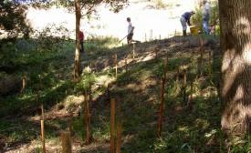 Ringwood Creek initial plantings 2004